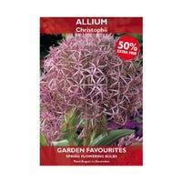 Allium Christophii Bulbs 2 + 50% Free