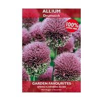Allium Drumstick 15 Bulbs + 100% Free