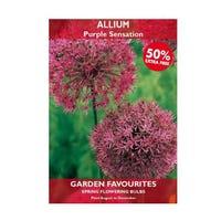 Allium Purple Sensation Bulbs 2 + 50% Free