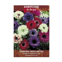 Anemone St Brigid Bulbs 12 Pack