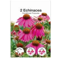 Echinacea Purpurea Bulbs 2 Pack