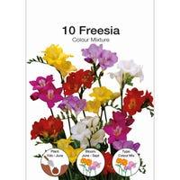 Freesia Mixed Bulbs 10 Pack