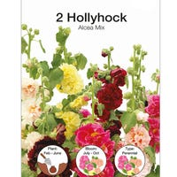 Holyhock Alcea Mixed Bulbs 2 Pack