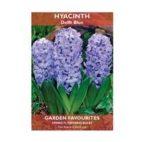 Hyacinth Delft Blue Bulbs 2 Pack