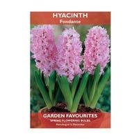 Hyacinth Fondante Bulbs 2 Pack