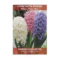 Hyacinth Bulbs Mixed 3 Pack