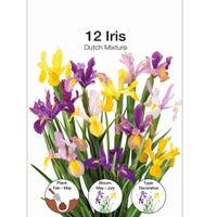 Iris Dutch Mixed Bulbs 12 Pack