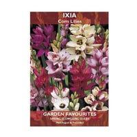 Ixia Corn Lilies Bulbs 20 Pack