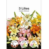 Lily Asiatic Mixed Bulbs 3 Pack