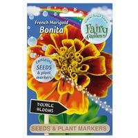 Fairy Garden Flowers Marigiold