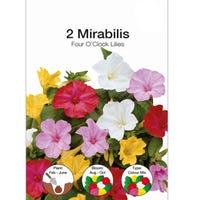 Mirabilis Jalapa Mixed Bulbs 2 Pack