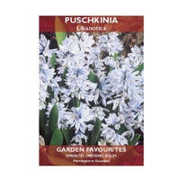* Puschkinia Libanotica Bulbs 10 Pack