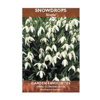 Snowdrops Bulbs 6 Pack