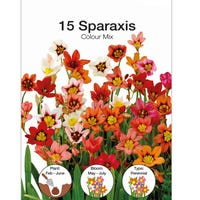 Sparaxis Mixed Bulbs 15 Pack