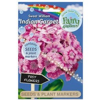 Fairy Garden Flowers Sweet William