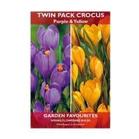 Crocus Bulbs Mixed Purple & Yellow 12 Pack