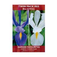 Iris Mixed Blue & White Bulbs 10 Pack
