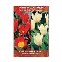 Tulip Scarlet Baby/Concerto Bulbs 6 Pack